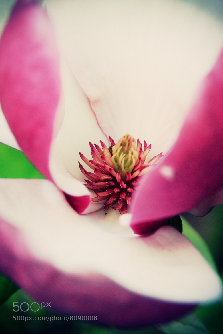 Photograph Intensive Flower by Phillipp Arnold on 500px