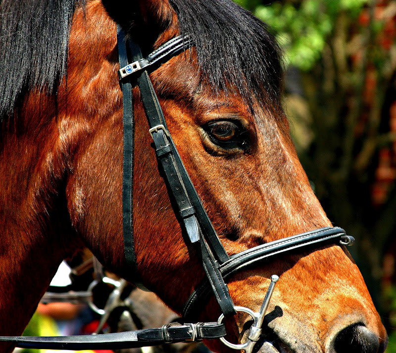 Photograph Horsing Around by Greg Maney on 500px