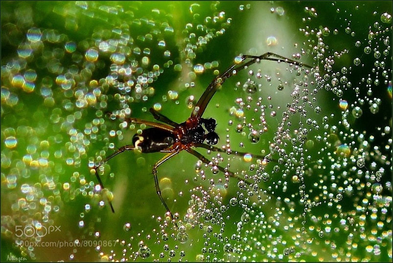 Photograph Drops and spider.. by Nurşen Biçer on 500px