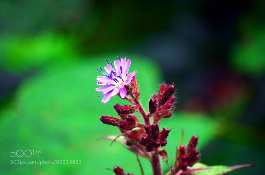 Photograph A Flower by Barış Kayhan on 500px