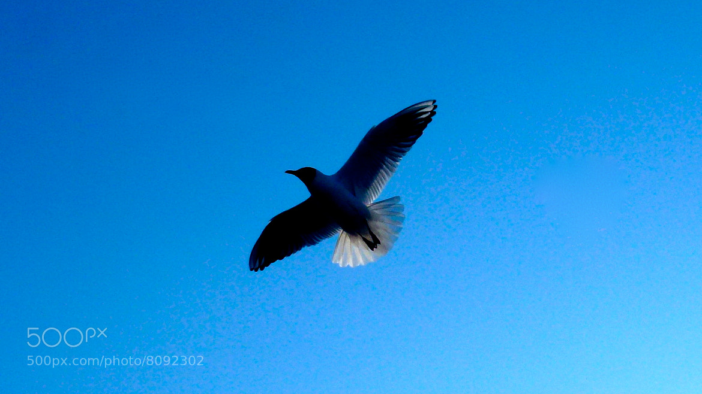 Photograph The Seagull by Maurice Brackmann on 500px