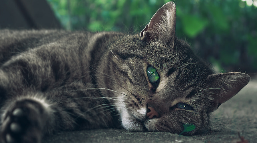 Photograph Cat by Stef Tijhaar on 500px