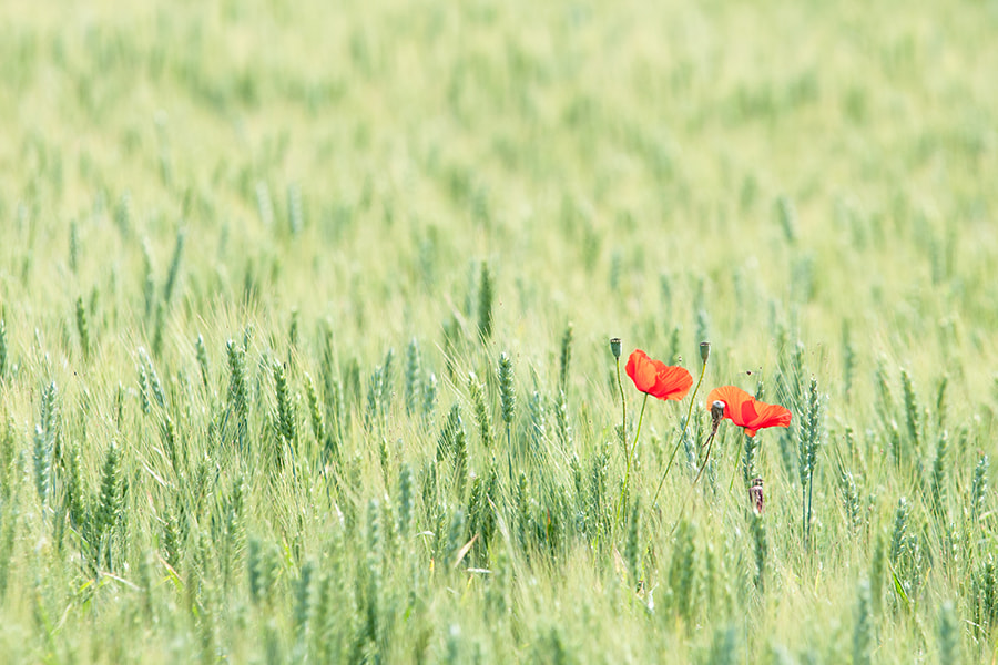 Photograph Two by Umberto Salvagnin on 500px