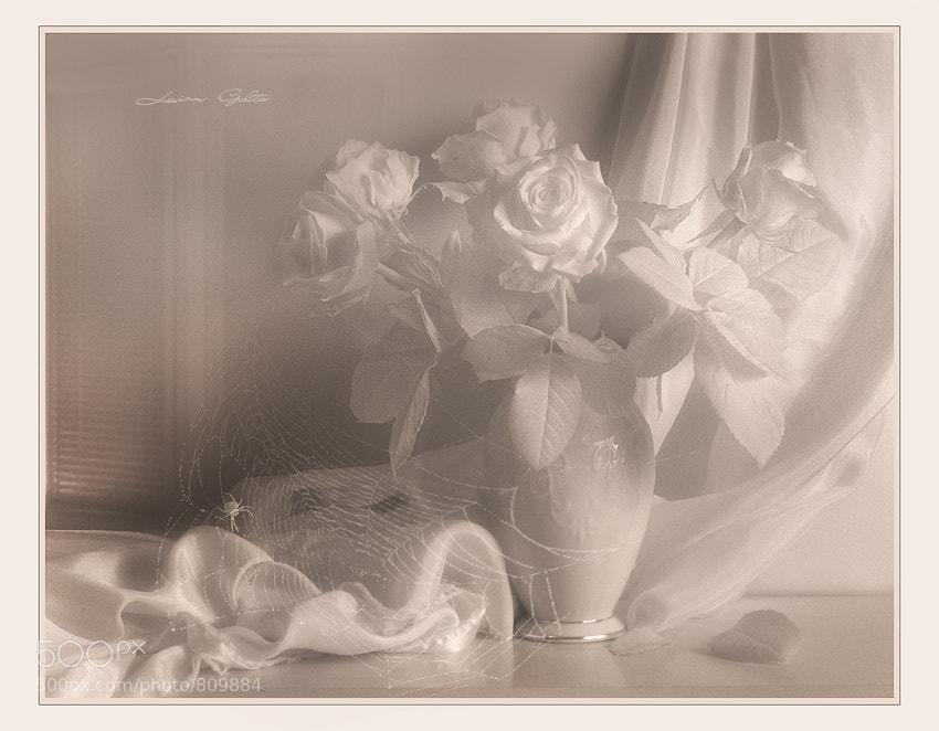 Photograph Белоснежной нежностью окутан by Luiza  Gelts -            Луиза  Гельтс on 500px