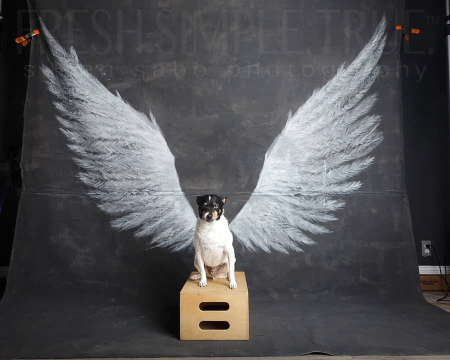 An ongoing project I love, with lots of dogs and people. It's about life, depression, happiness, change, and just being.