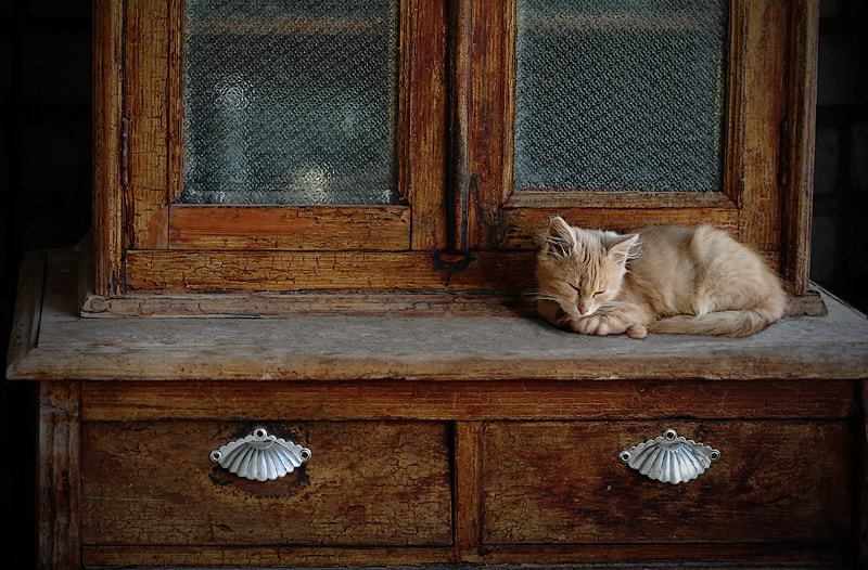 Photograph Afternoon nap by Ekaterina Karavaeva on 500px