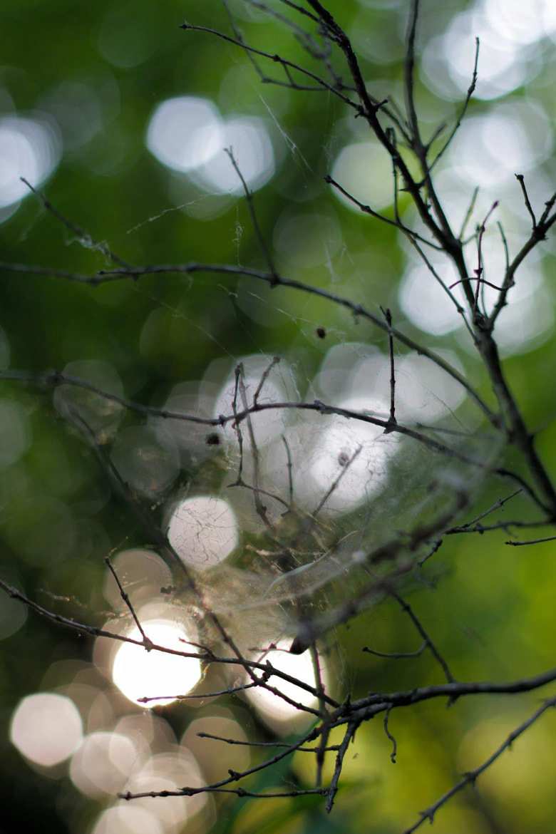 Photograph Web. by Adam Tabor on 500px