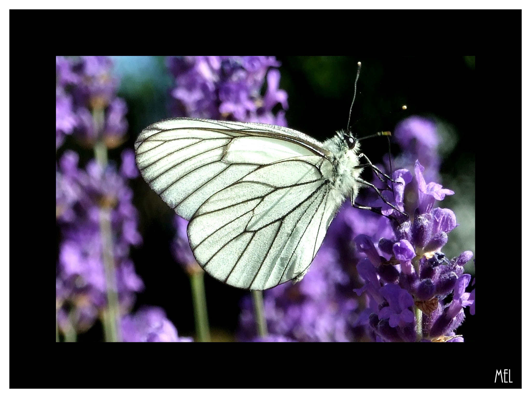 Photograph Butterfly  by Mel Mel' on 500px