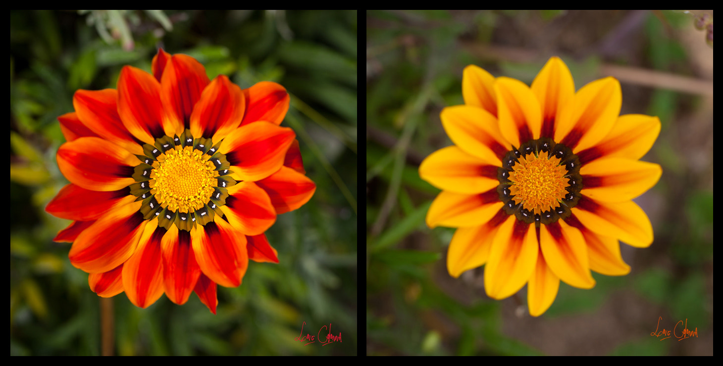 Photograph Floral duo by Loïc  Colonna on 500px
