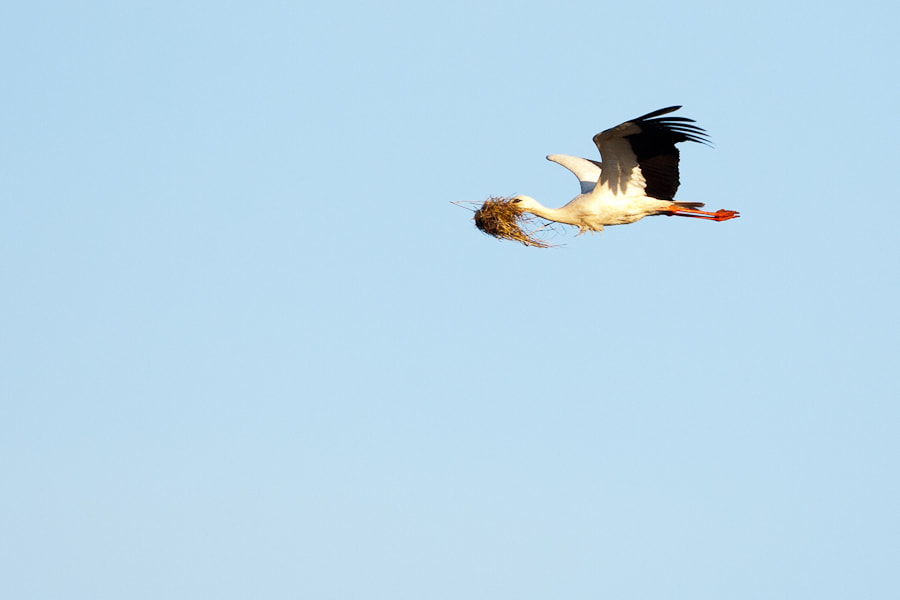 Photograph White Stork by Tony Persson on 500px