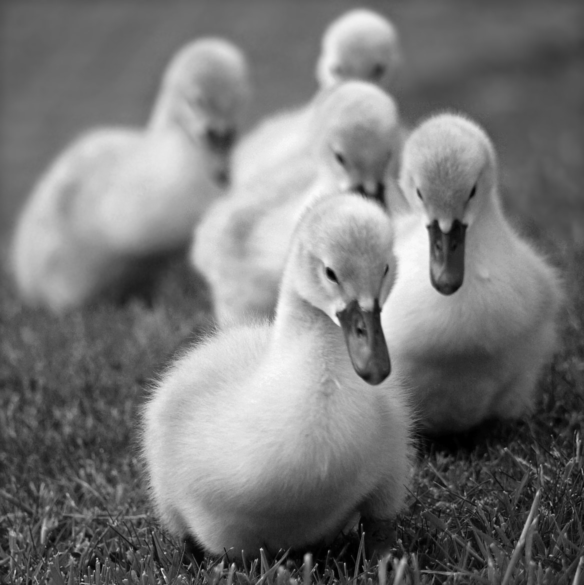 Photograph the posse by KENNY BARKER on 500px