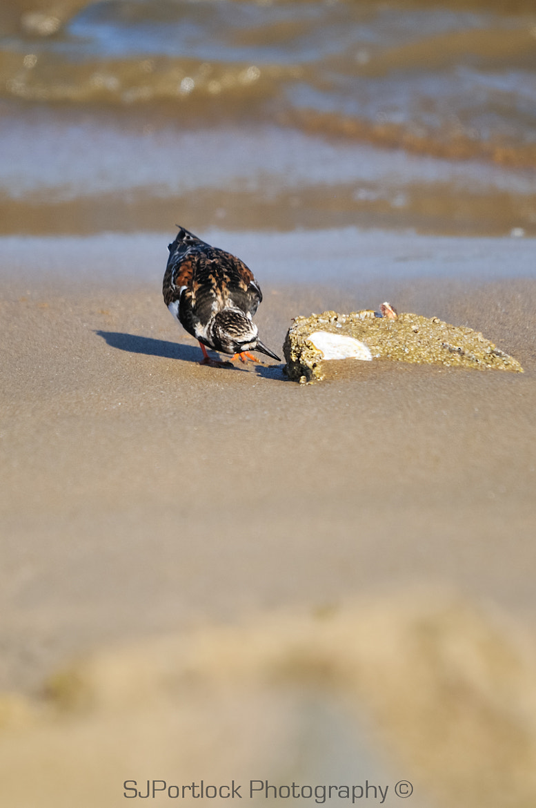 Photograph Turnstone? This might be a bit big!  by Stephen Portlock on 500px