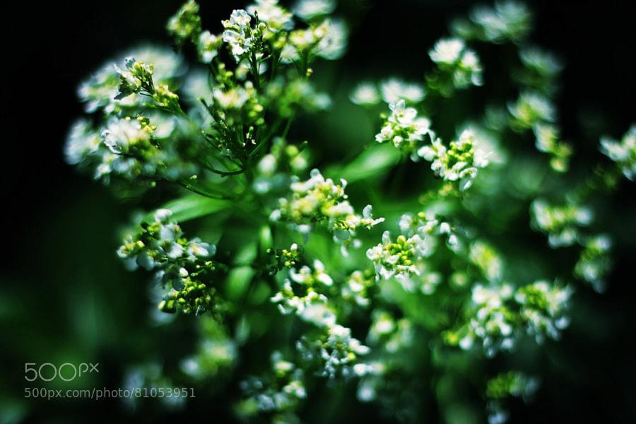 Photograph * by Ксения Давыдова on 500px