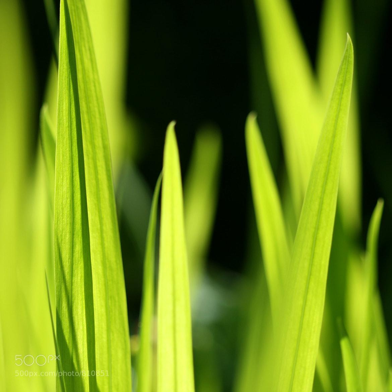 Photograph Blades by Mukumbura Photos on 500px