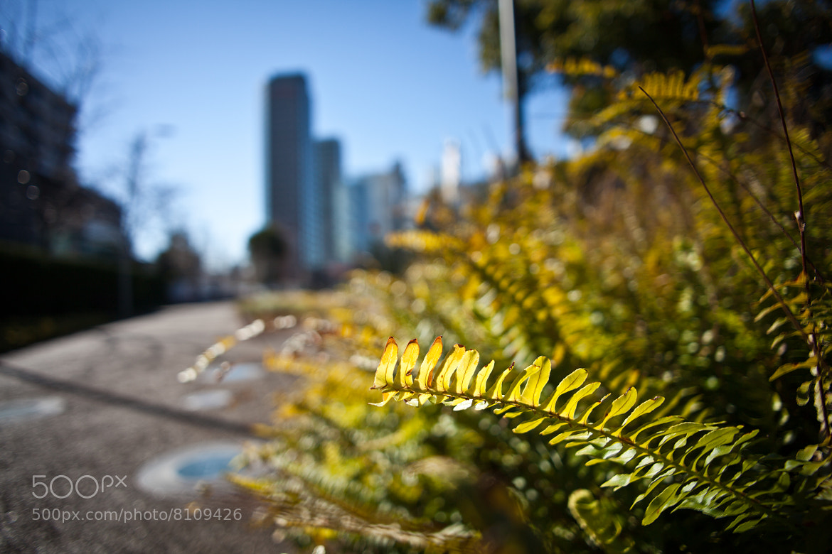 Photograph Grass in the city by fox foto on 500px
