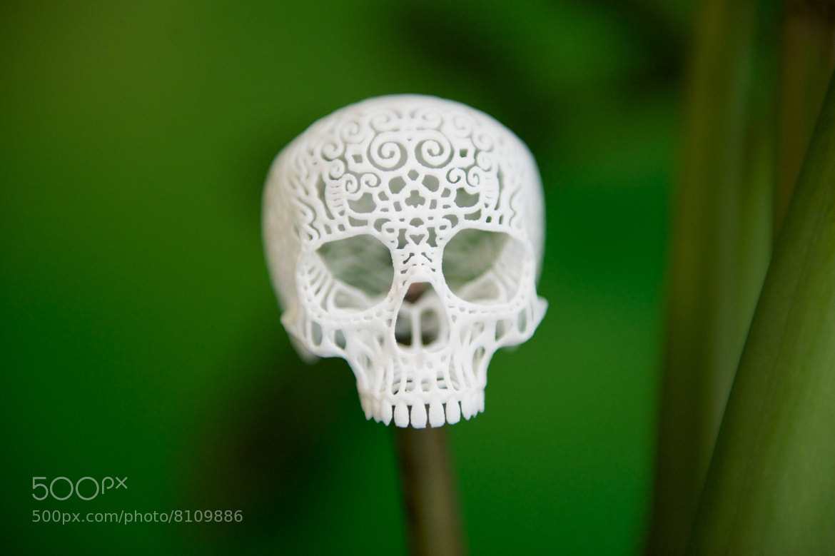 Photograph Filagree Skull by Joshua Harker by Josh Rubin on 500px