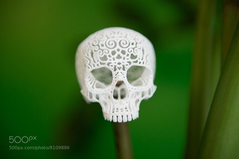 Photograph Filagree Skull by Joshua Harker by Josh Rubin on 500px