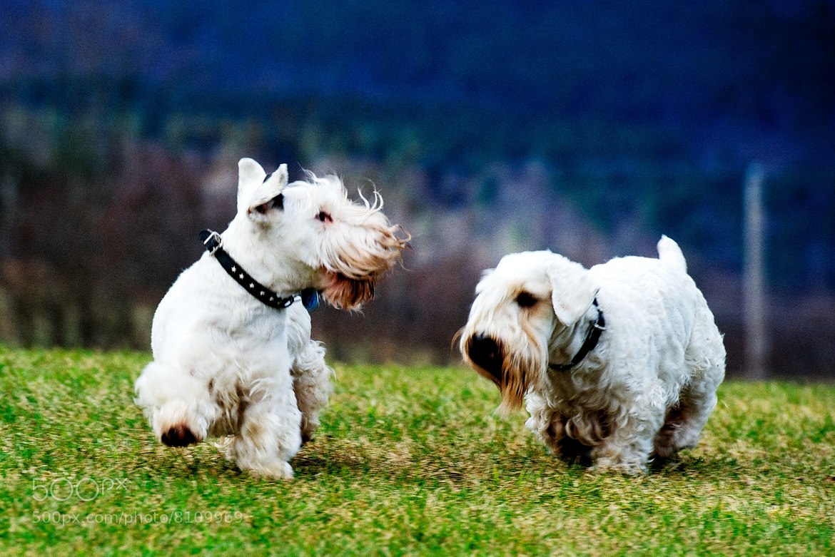 Photograph Otis and Logan in VT by Josh Rubin on 500px