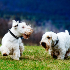Otis and Logan in VT by Josh Rubin (joshrubin)) on 500px.com
