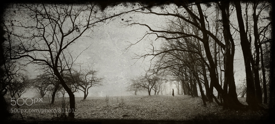 Photograph february by Evgeni Attsetski on 500px