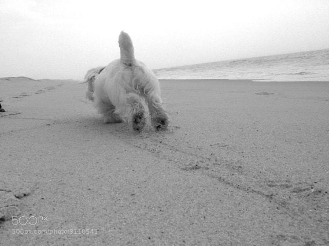 Photograph Otis on the Beach by Josh Rubin on 500px
