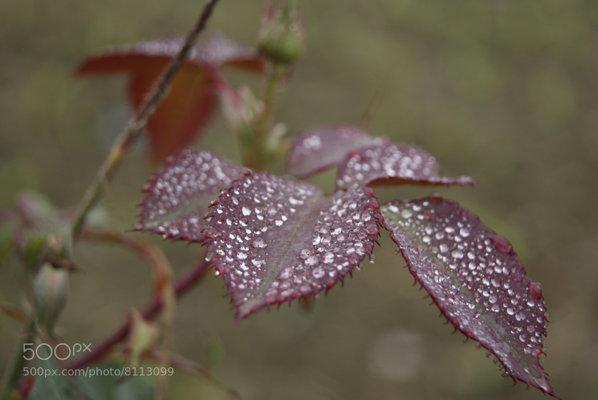 Photograph Drops from Heaven by Afzal Khan on 500px