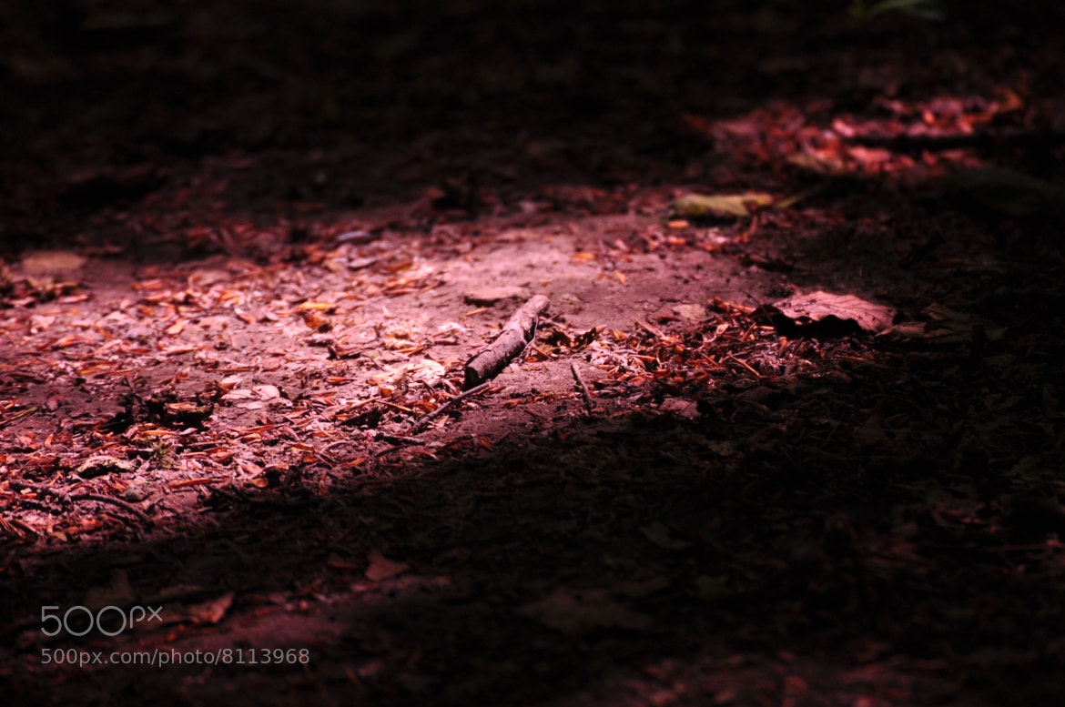 Photograph Fallen twig by Prasanth Nair on 500px
