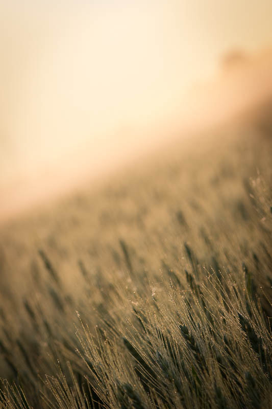 Photograph The summer, a field and some fog by Markus Weik on 500px