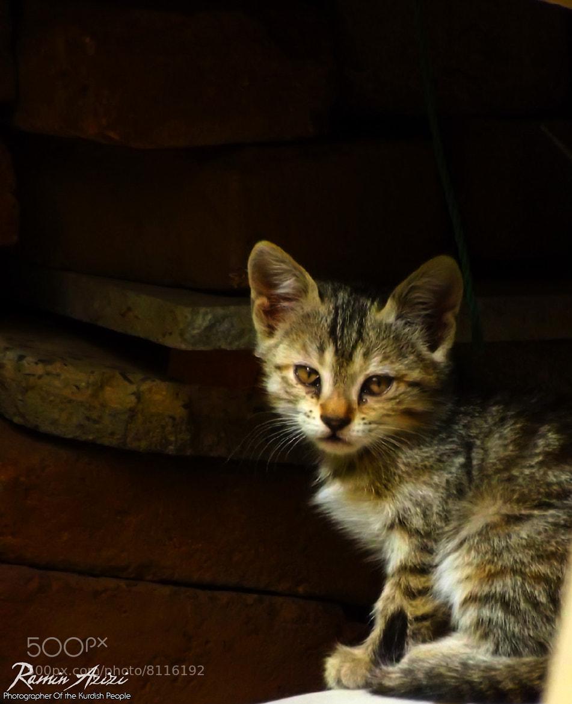 Photograph Cat by ramin azizi on 500px
