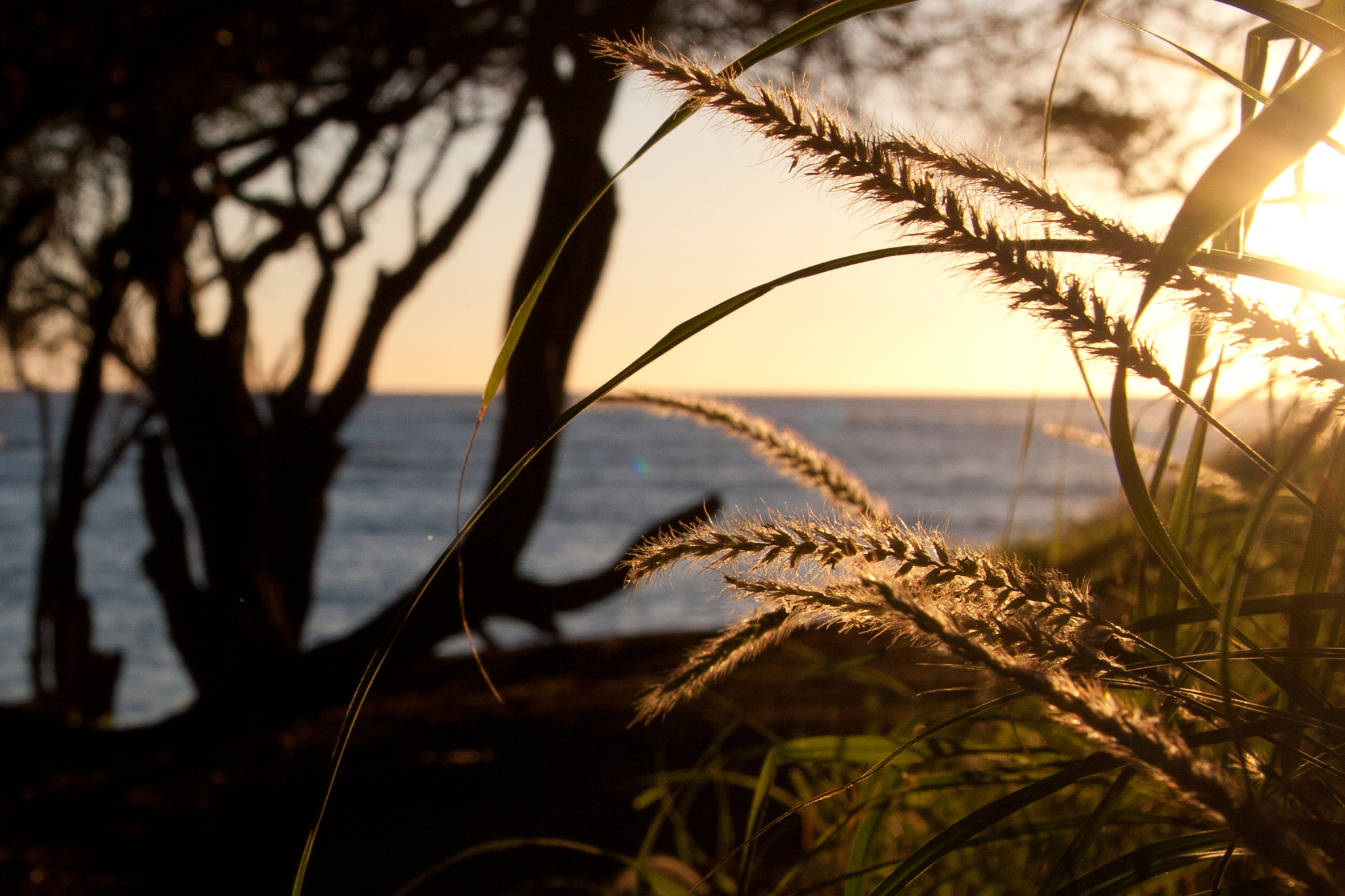 Photograph Sunset in Oahu by  Douglas on 500px