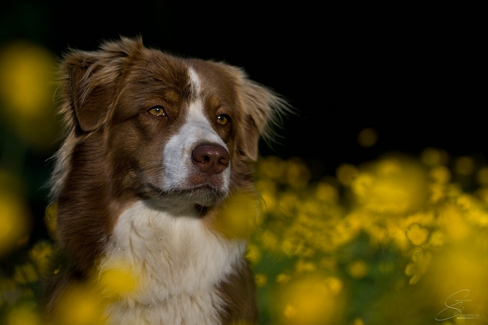 Photograph Amber by SW-FotoArts on 500px