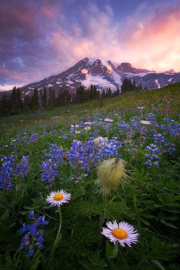 Good Morning de Majeed Badizadegan sur 500px.com