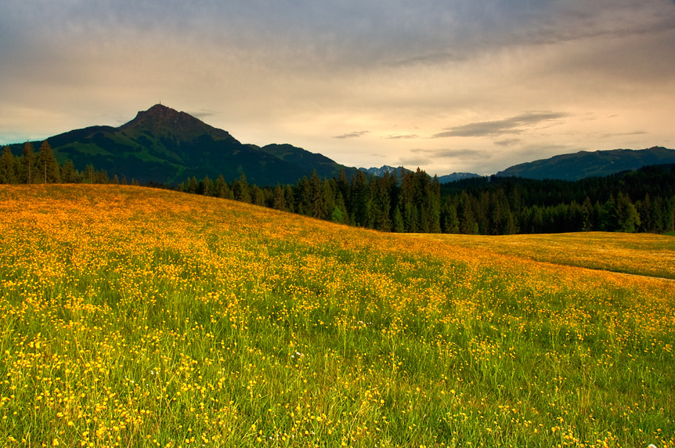 Photograph Sunset over summer field by Calin C. on 500px