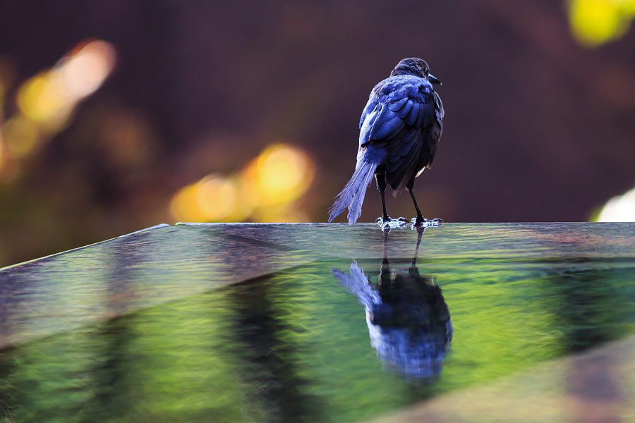 Reflective by Chris McNeill on 500px.com