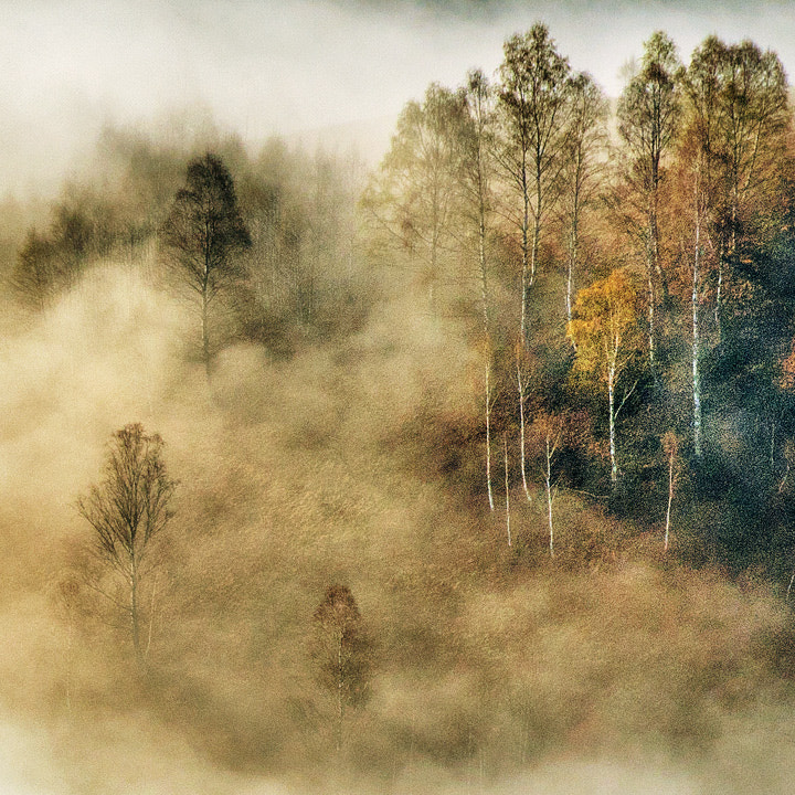 Photograph Untitled by Cornel Pufan on 500px