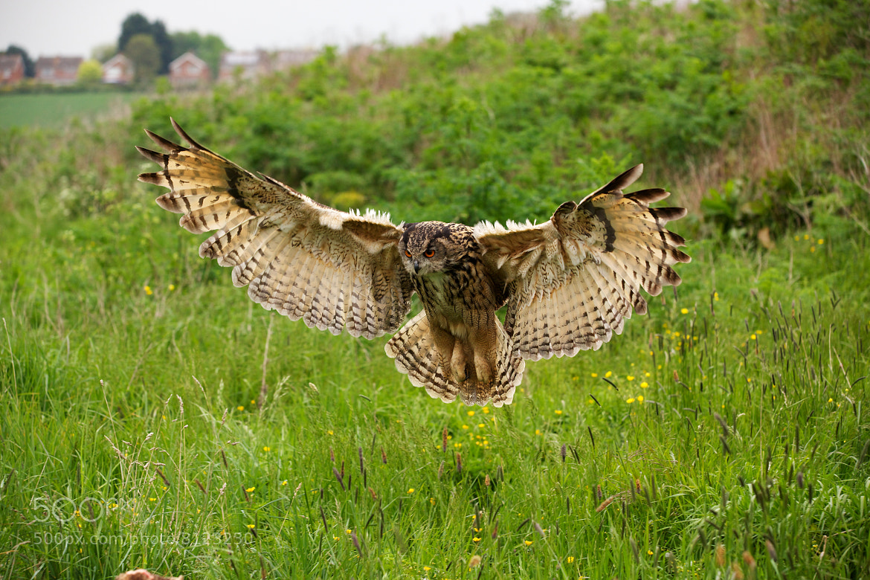 Photograph Eagle Owl by Steven Parker on 500px
