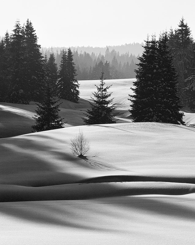 Photograph Winter Forest by Jiri Presl on 500px