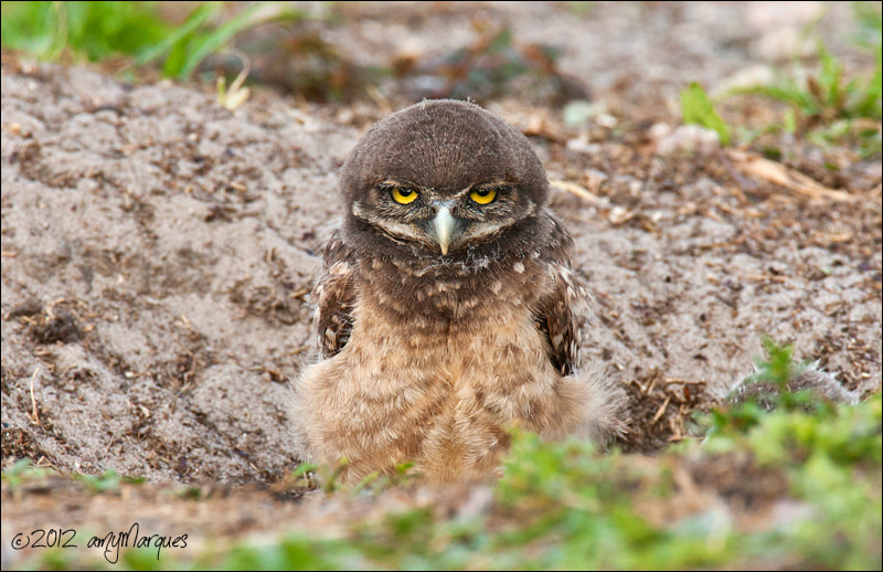 Photograph Warning... Do Not Mess With This Chick by Amy Marques  on 500px