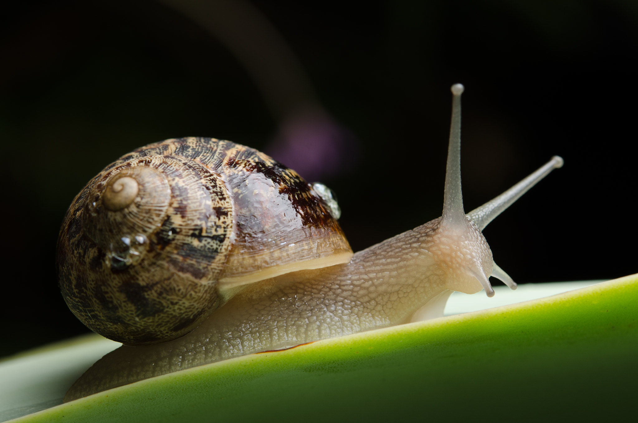 Photograph Snail by greg dusud on 500px