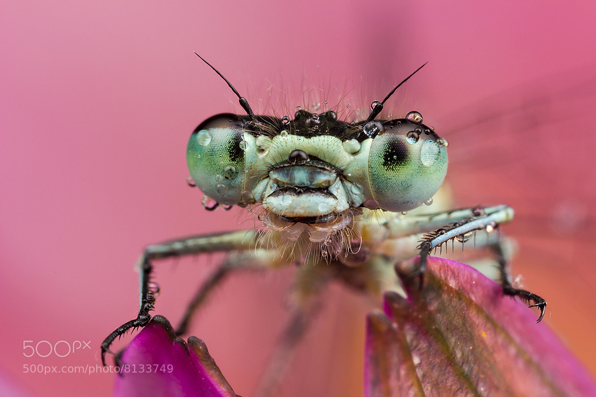 Photograph Posing Damsel by Alistair Campbell on 500px
