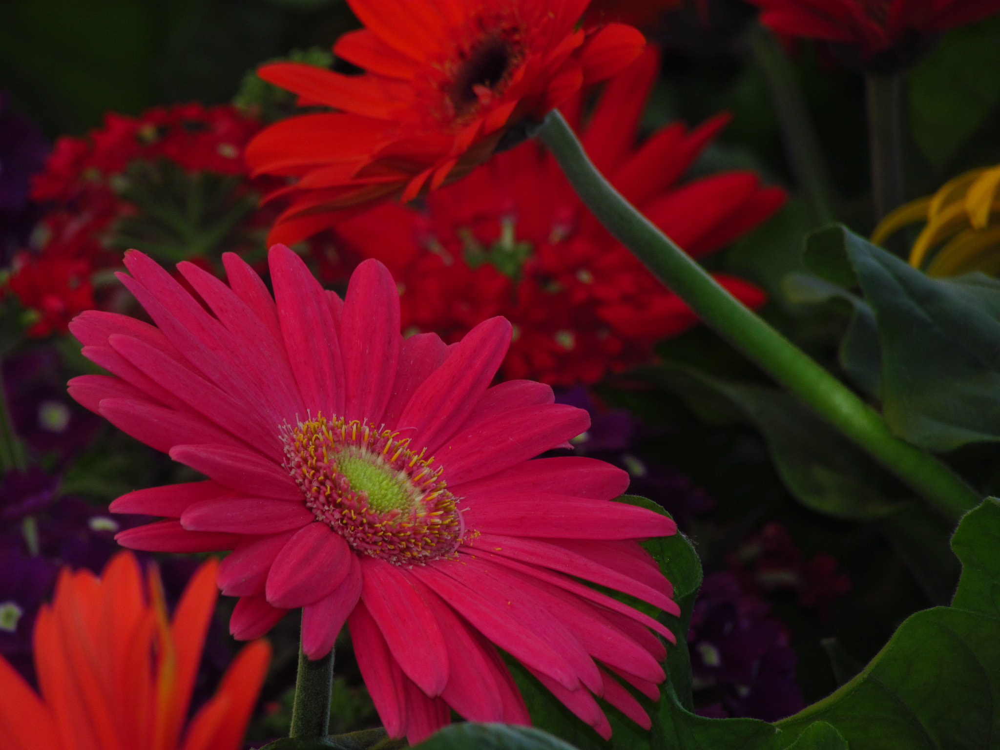 Photograph Pink, Red & Green... by Palmer Allen on 500px
