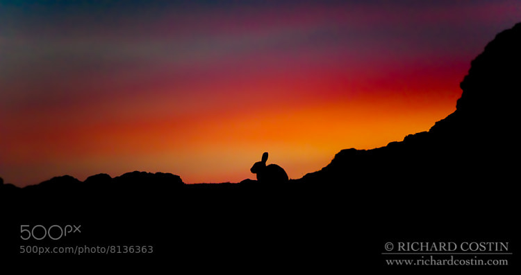 Photograph Rabbit On A Hill by Richard Costin on 500px