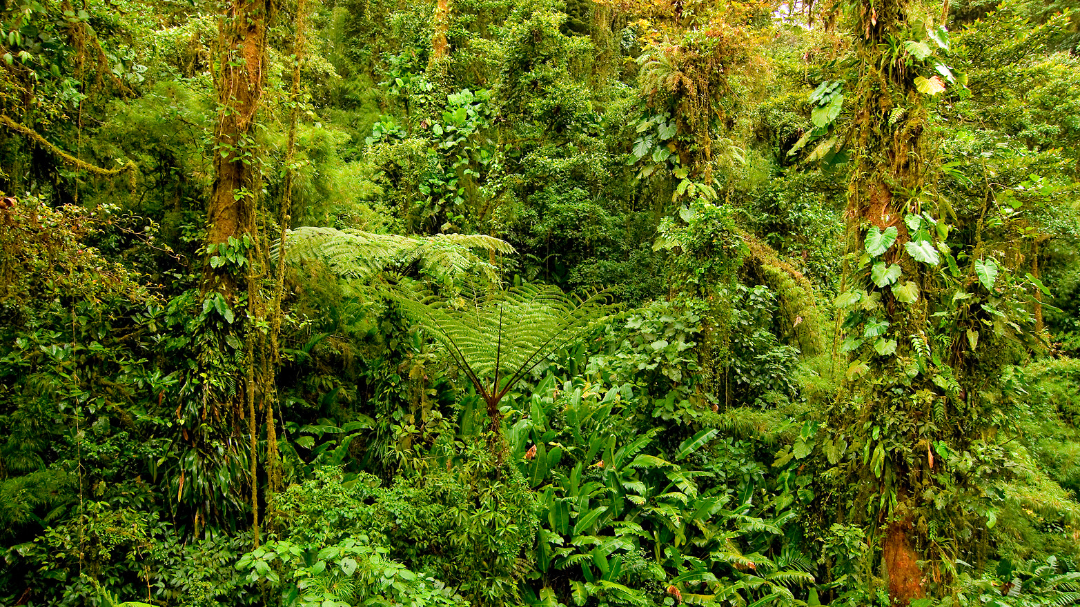 Photograph Cloudforest by Spencer Robertson on 500px