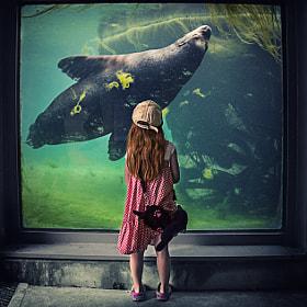 Mädchen beobachtet Seelöwe