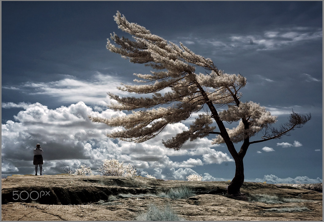 Photograph Lone Pine by Frank Lemire on 500px