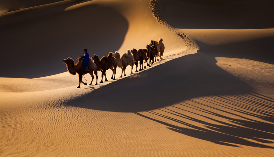 Photograph Run to the desert ???? by T.J ZHANG on 500px