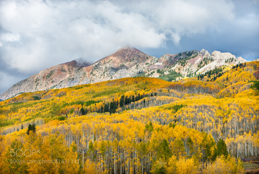 Photograph Fall Aspens - Crested Butte by Pat Kofahl on 500px