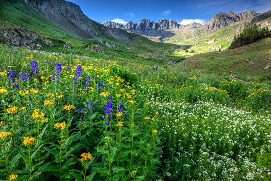Photograph American Basin Wildflowers by Parker Hill on 500px