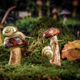 Snails | Hainbänderschnecken