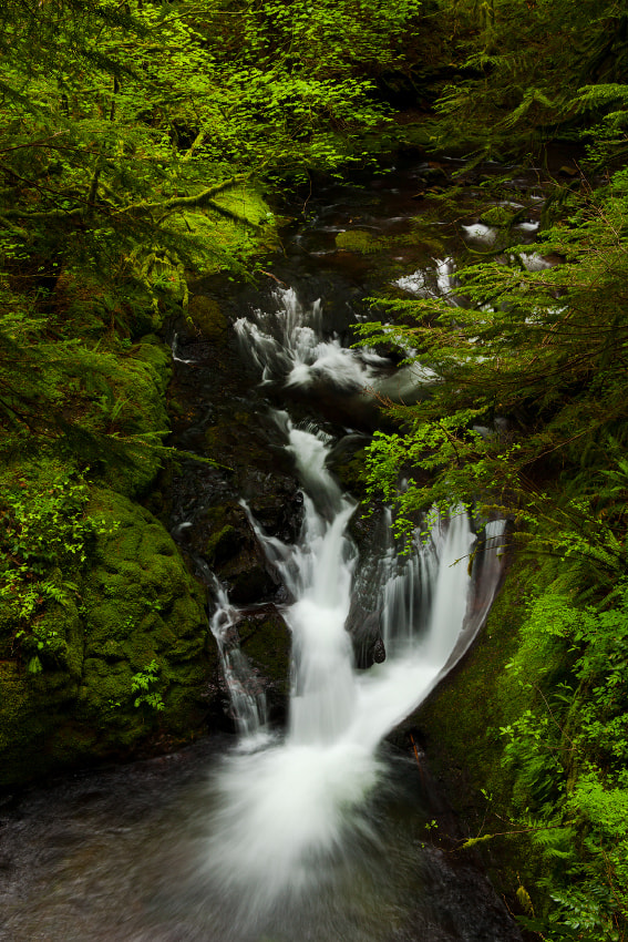 Photograph Forest Stream by Ned Fenimore on 500px